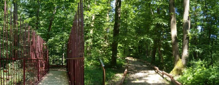 Bosco di Carpenedo – Riapertura al pubblico fino al 30 giugno
