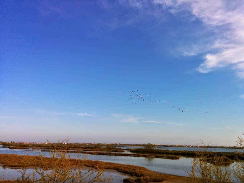 Lio Piccolo: il paradiso dei fenicotteri rosa nella laguna di Venezia