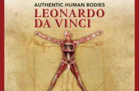 Authentic Human Bodies. 50 opere anatomiche dall'opera di Leonardo da Vinci fino a fine Settembre a Palazzo Zaguri