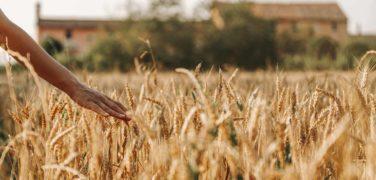 Agriturismo La Restera del Sile