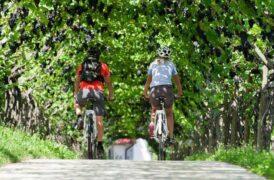 Valpolicella e Valdadige in bici